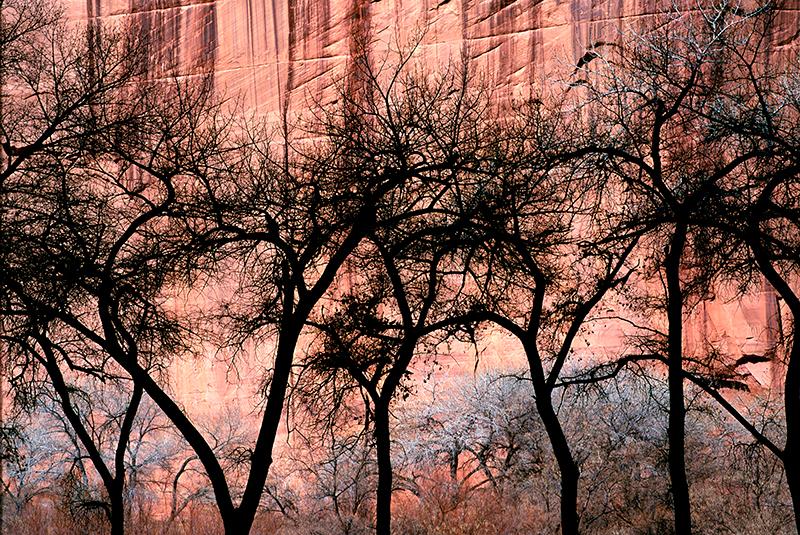 Cottonwood Silhouettes, Canyon de Chelly, Arizona