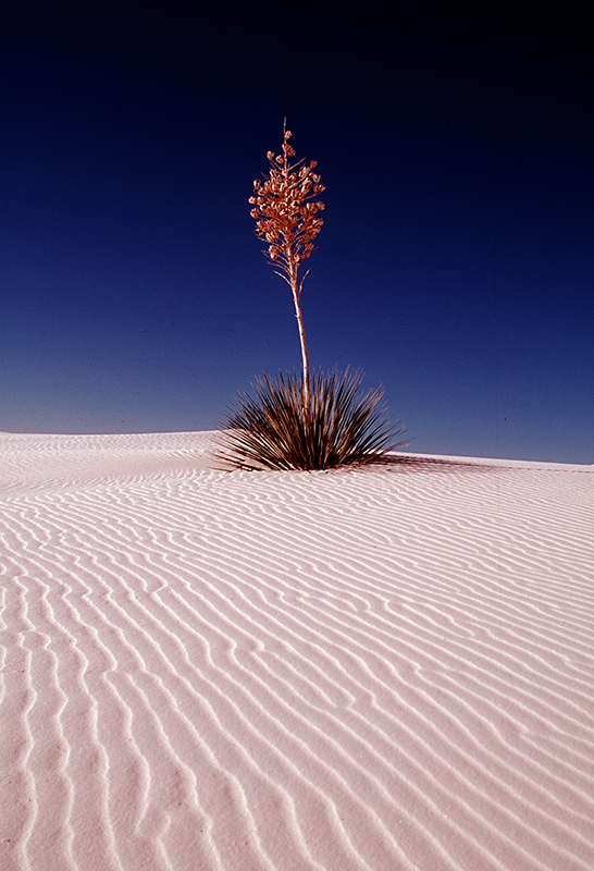 White Sands New Mexico 1