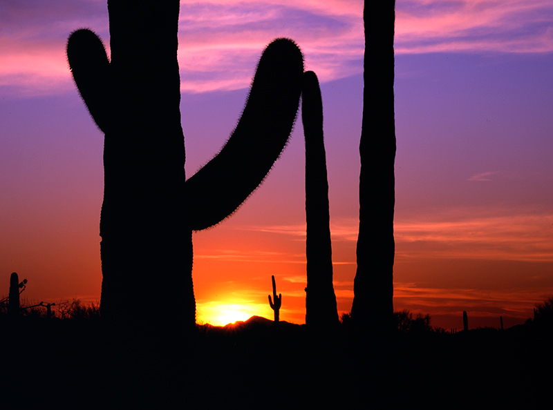 Sunset Saguaro 001